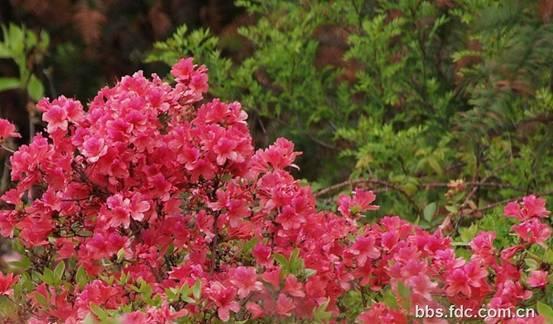 常见园林植物名录常绿灌木及小乔木植物名称